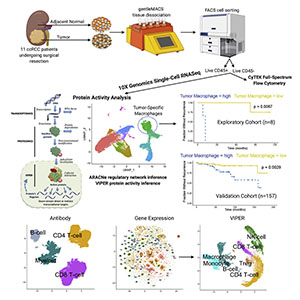 """Graphical Abstract for """"Single-cell protein activity analysis identifies recurrence-associated renal tumor macrophages"""""""
