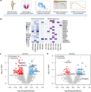 Integration of functional genomics with PDCs and big data for drug combination identification.