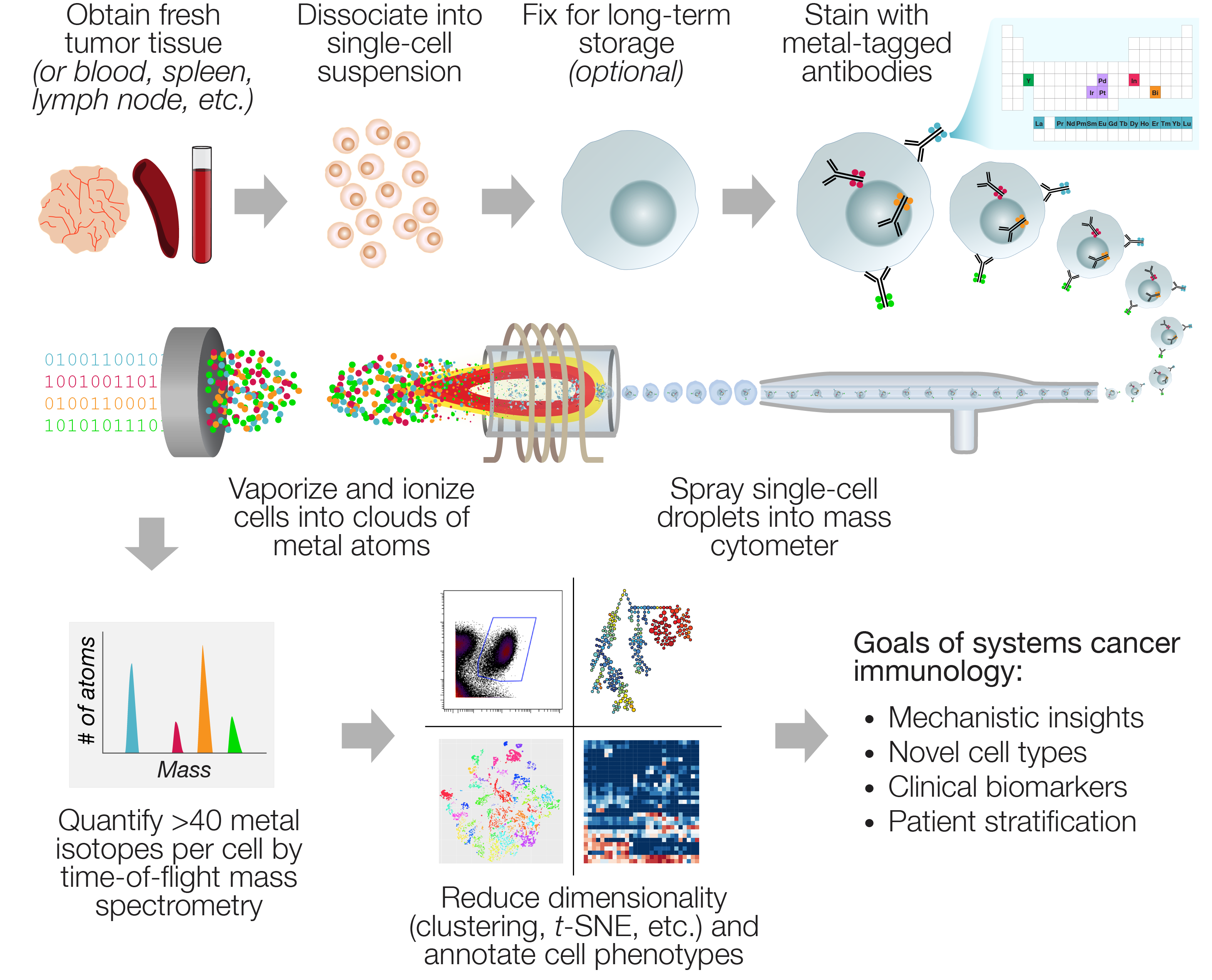 Mass cytometry analysis of tumor and immune tissues informs cancer systems immunology