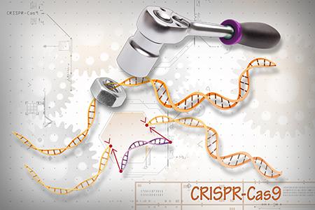 CRISPR-Cas9 Editing of the Genome