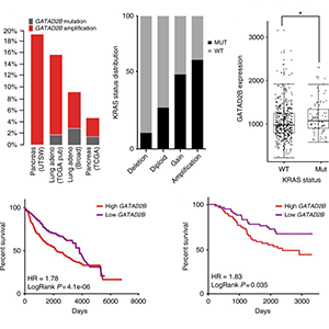 In vivo metastasis driver screening identifies GATAD2B