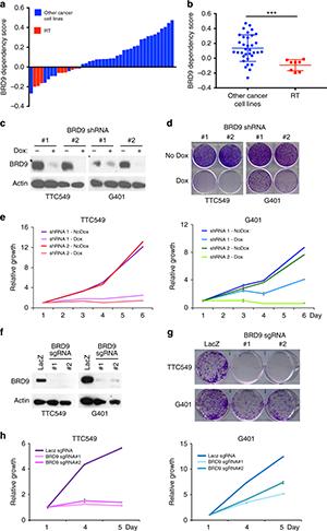 Genome-wide CRISPR-Cas9 screen identified BRD9 as a RT specific dependency.