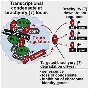 Sheppard et al. (2021) Cell Rep Med.