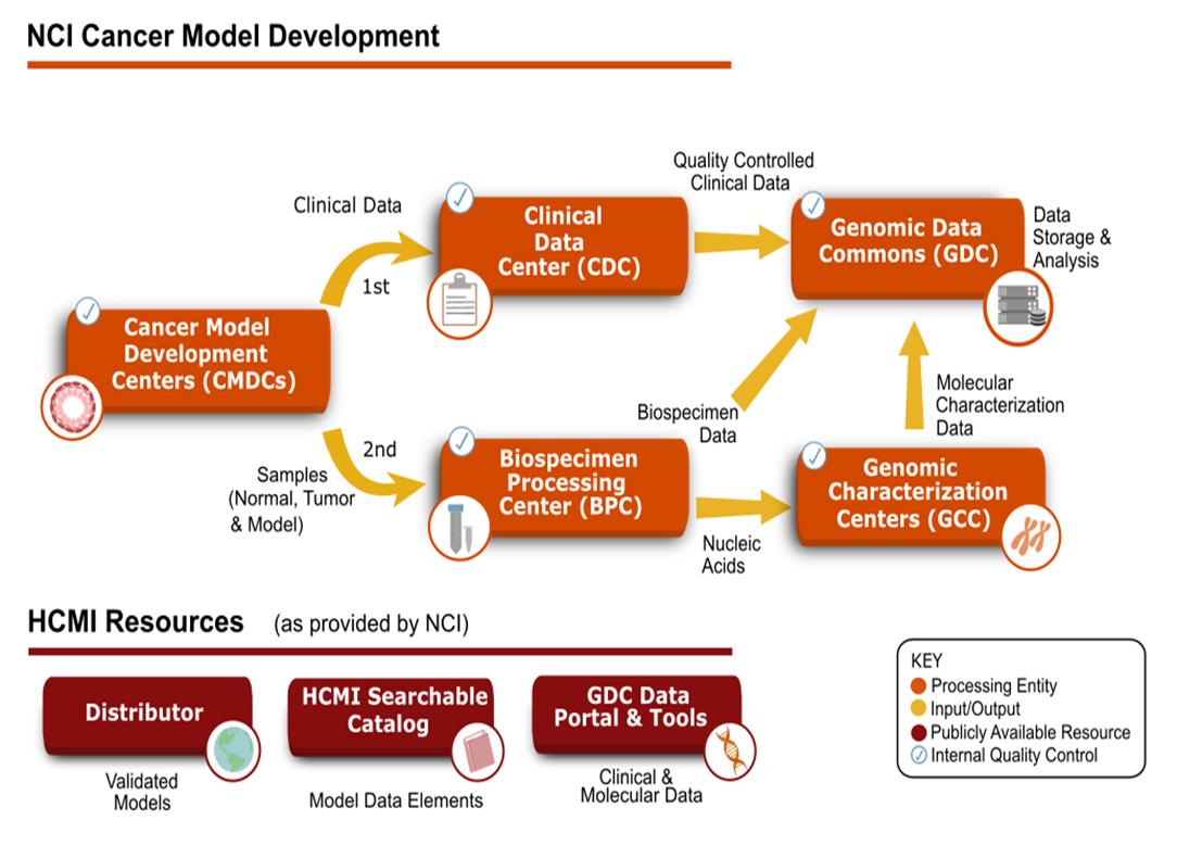 Cancer model development process flowchart