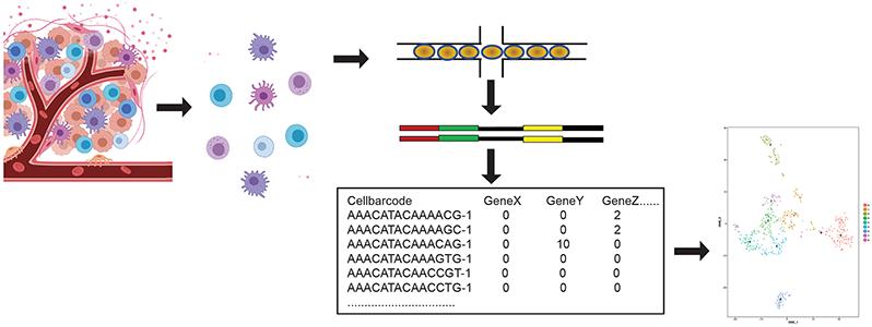 Schematic representation of microfluidics based scRNA-seq workflow