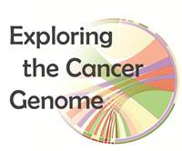 Exploring the cancer genome