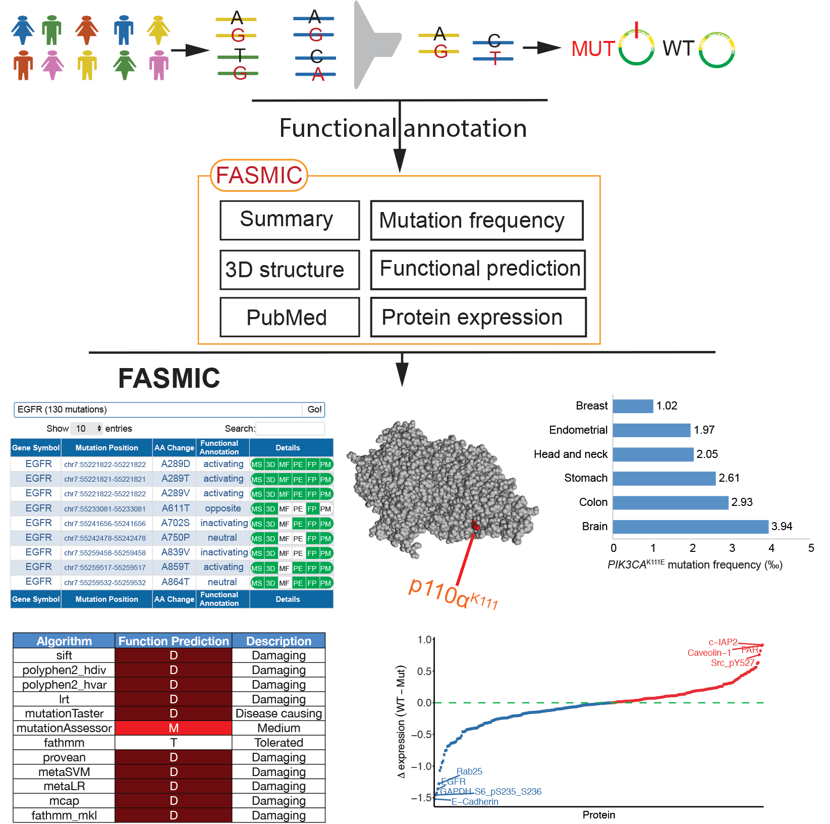 Overview of the FASMIC web portal, which can be used for exploring functional effects of cancer somatic mutations