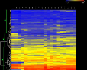 Heat map of the expression of ABC transporter genes in Tetrahymena