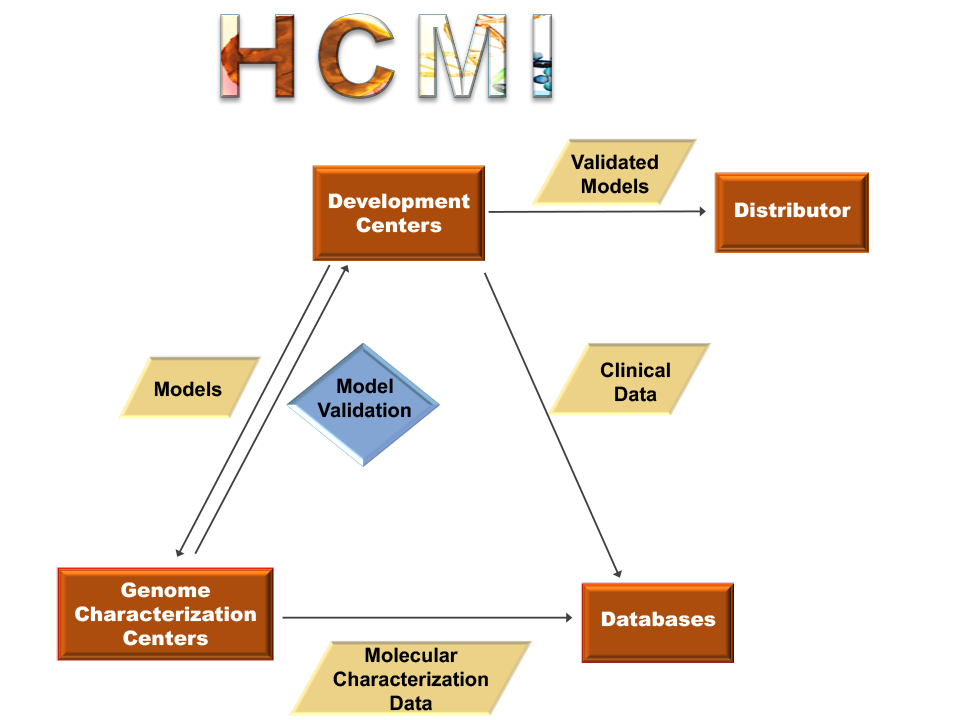 flow chart depicting the human cancer model development process