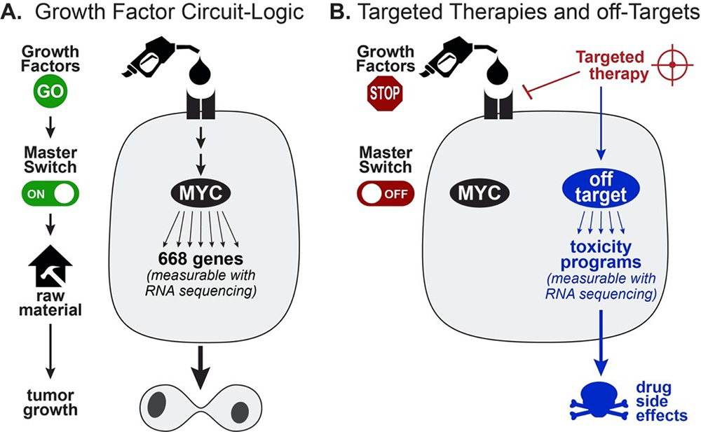Master switch transcription factor signaling pathways drive cellular proliferation and are important therapeutic targets