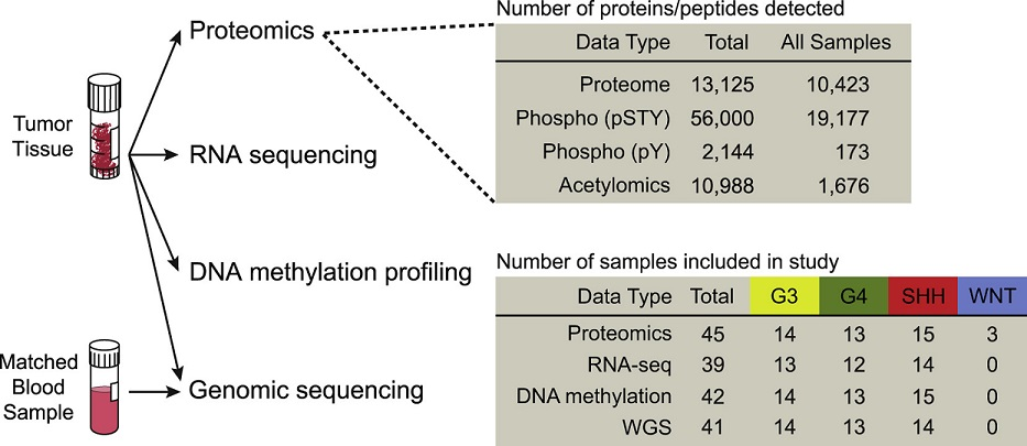 Summary of Data Types Included in the Study, Depth of Proteomic Data Types, and Cohort Composition