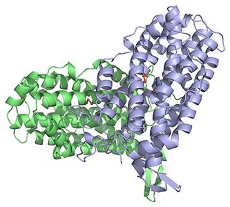 Ribonucleotide reductase R2 e coli