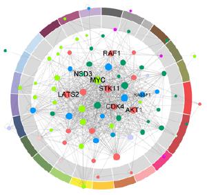 PPI maps cancer genes like MYC, STK11,RASSF1 and CDK4