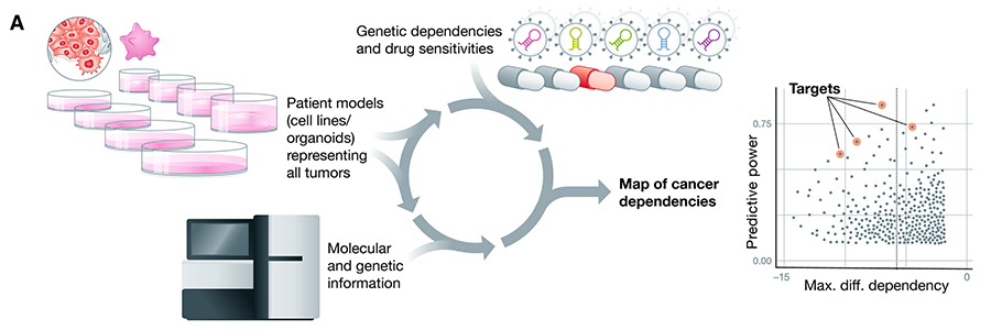 By profiling hundreds of patient models of human cancer, the Cancer Dependency Map systematically identifies gene dependencies, small molecule sensitivities, and the markers that predict their response