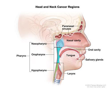 Head and Neck Cancer Regions