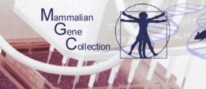 NIH Mammalian Gene Collection