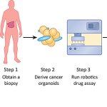 Patient-Derived Models for Precision Oncology. Shown are key steps to enable functional drug testing on patient-derived organoids and the generation of a functional atlas of cancer.