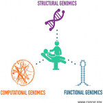 Structural, functional, and computational genomics lead to patient care