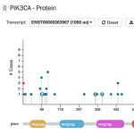 PIK3CA Protein