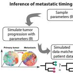 Inference of patient-specific evolutionary dynamics and the timing of metastasis from cancer genomic data using SCIMET.