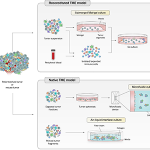 Tumor Organoid Culture Systems Modeling the Tumor Immune Microenvironment