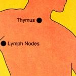 Immune System Illustration