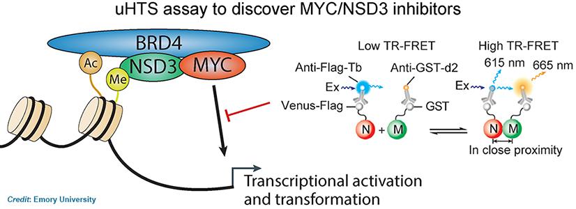 uHTS assay to discover MYC/NSD3 inhibitors