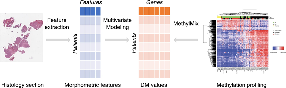 Representation of the machine learning pipeline to predict DNA methylation states from whole slide images.